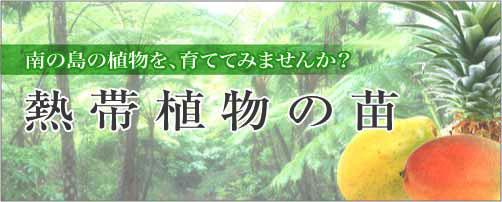 南の島の植物を育ててみませんか? 熱帯果樹の鉢植え