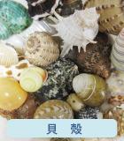 貝殻,シェルなどのヤドカリ オカヤドカリ用商品